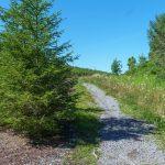 Appalachian Trail north of Sams Gap