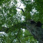 Top of a Big Tree in Joyce Kilmer