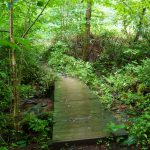 Plank Bridge on the Joyce Kilmer Loop Trail