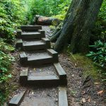 Steps on the Joyce Kilmer Memorial Loop Trail