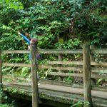 Mossy Bridge on the Joyce Kilmer Loop