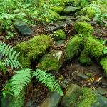 Mossy Wash in Joyce Kilmer