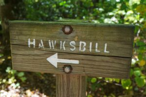 Hawksbill Trail Directional Sign