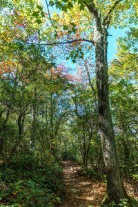 Early Fall Color on the Hawksbill Trail