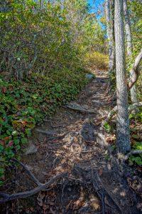Rooty Climb on the Hawksbill Trail