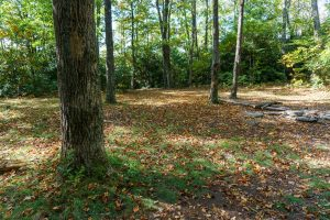 Campsite on Jonas Ridge Trail