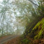 Mossy Rocks in Fog