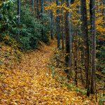 Follow the Yellow-Leaf Road