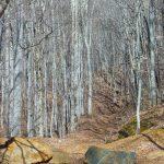 Bear Pen Trail Start