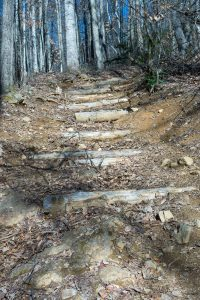 Steps on the Staire Creek Trail