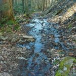 Wet Stretch of the Staire Creek Trail