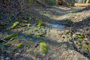 Mossy Wet Area on the Walker Creek Trail