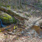 Tributary on the Walker Creek Trail