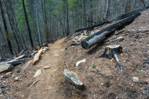 Burned Logs and Rocks on the Chestnut Knob Trail