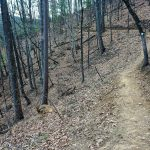 Chestnut Knob Trail Winds Along the Forested Slop