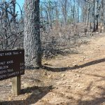 Chestnut Knob Trail Sign