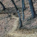 White Diamond Blaze on the Chestnut Knob Trail