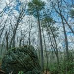 Big Rock and Tall Tree along the Linville River Trail