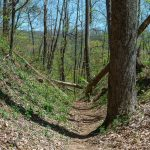 Railroad Cut on the Farlow Gap Trail