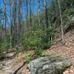 Rock Outcrop on the Farlow Gap Trail
