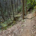 Farlow Gap Trail at a Slide