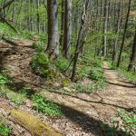 Farlow Gap Trail Switchback
