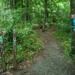 Start of the Mount Mitchell Trail