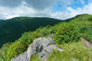 View of Tennent Mountain and Black Balsam Knob