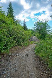 Smooth Stretch of Trail