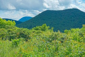 View of Sam Knob and Mount Hardy From the Ivestor Gap Trail