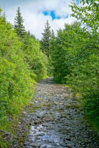 Wet Section of Ivestor Gap Trail