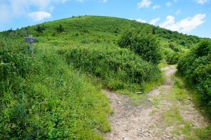 Art Loeb Graveyard Ridge Trail Junction
