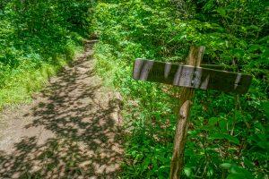 Art Loeb - Shining Creek Trail Junction