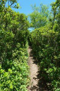 Art Loeb Trail near Shining Rock Gap