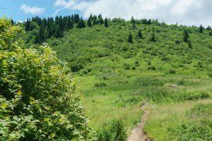 Flower Gap on the Art Loeb Trail