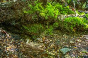 Spring Beside the Art Loeb Trail