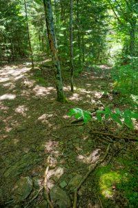 Ivestor Gap Trail at Little East Fork Junction