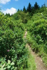 Old Butt Knob Trail