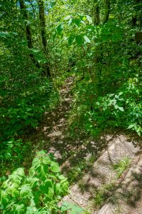 Top of Shining Creek Trail