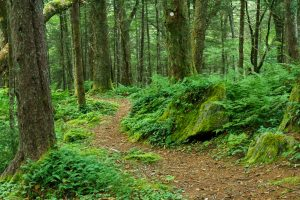 Lush Green Ferns and Moss