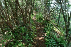 Rhododendron on a Narrow Ridge