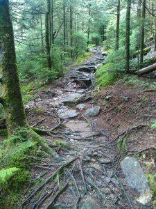 Wet Rocky Camp Alice Trail
