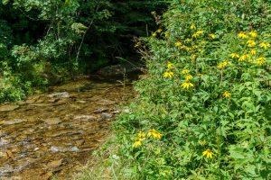 Wildflowers Beside Lower Creek