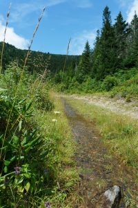 Commissary/Mountains to Sea Trail