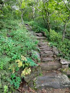 Steps on the Mountains to Sea Trail