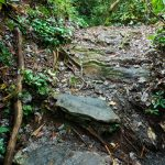 Rock Steps on the Duggers Creek Trail