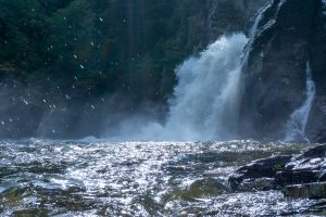 The power of Linville Falls turns the plunge basin into a churning maelstrom with whitecaps lashing the rocks. It's mesmerizing.