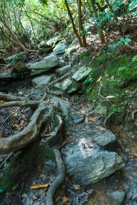 Rocky Section of Linville Falls Trail