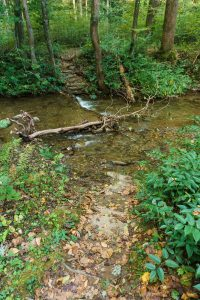 First Creek Crossing on Hickory Branch