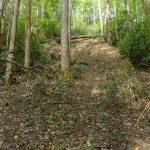 Landslide Scar on the Hickory Branch Trail